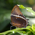 Brown Beauty by David Lee Thompson
