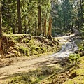 Brown Dirty Road Under Spring Sun Rays by Vadzim Kandratsenkau
