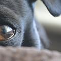 Brown Eyed Boy by Trish Tritz