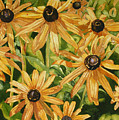 Brown Eyes by Helen Shideler