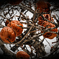 Brown Fruit Abstract by Sherman Perry