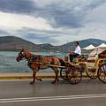 Brown Horse Drawn Carriage by Iordanis Pallikaras