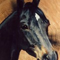 Brown Horse  Tingeys Star by JoAnne Corpany