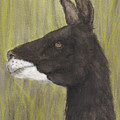Brown Llama Profile Cathy Peek Farm Animal Art by Cathy Peek