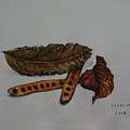 Brown Of Leafs And Seeds by Sukalya Chearanantana