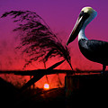 Brown Pelican At Sunset - Painted by Ericamaxine Price