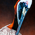 Brown Pelican by Donna Proctor