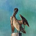 Brown Pelican - Fort Myers Beach by Kim Hojnacki