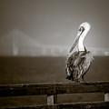 Brown Pelican On St. Simons Island Pier - Bw by Chris Bordeleau