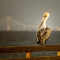 Brown Pelican On St. Simons Island Pier by Chris Bordeleau