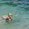 Brown Pelican by Susan McMenamin