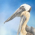 Brown Pelicans by Sharon Bowman