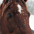 Brown Snow Horse by Philip Openshaw