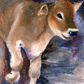 Brown Swiss Calf Aceo by Brenda Thour