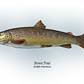 Brown Trout by Ralph Martens
