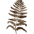 Fern Leaf Botanical Poster, Brown Wall Decor Modern Home Art Print, Abstract Watercolor Painting by Joanna Szmerdt