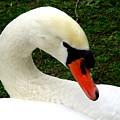 Bruges Swan 2 by Randall Weidner