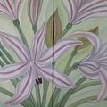 Brunsvigia Grandiflora by Marinella Owens