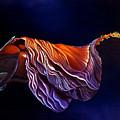 Brused Hibiscus by Anni Adkins