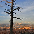 Bryce Canyon Dead Tree Sunset 3 by Mo Barton