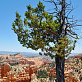 Bryce Canyon Fairyland Point Portrait by Kyle Hanson