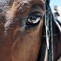 Bryce Canyon Horse Eye by Kyle Hanson