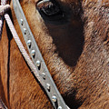 Bryce Canyon Horse Portrait by Kyle Hanson