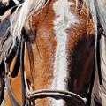Bryce Canyon Horseback Ride by Kyle Hanson