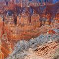 Bryce Canyon Light  by Stephen  Vecchiotti