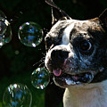 Bubble Monster by Susan Herber