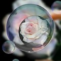 Bubbles Of Love by Jeannie Rhode