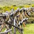 Buck And Rail Fence In The High Country by John Trax
