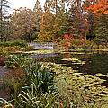 Buck Garden Fall by Robert Pilkington