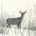 Buck  by Harry Moulton