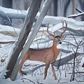 Buck In The Snow by Dolores Brittain