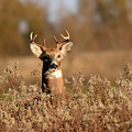Buck In The Weeds by Dwight Eddington