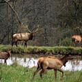 Buck In Wilderness by Carol Schultz