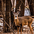 Buck by Lowlight Images