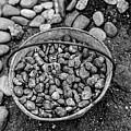 Bucket Of Rocks In Black And White by Deborah Brown