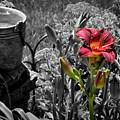 Buckets Of Water And A Splash Of Flower by Deborah Klubertanz
