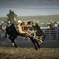 Bucking Bronco 2 by Timothy Hacker