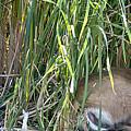 Bucks In The Brush by Earl Nelson