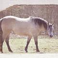 Buckskin Horse  by Alanna Long
