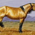 Buckskin Mustang Stallion by Crista Forest