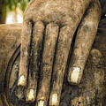 Buddha Hand by Adrian Evans