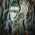 Buddha Head by Eena Bo