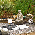 Buddha Looks At Yin And Yang by Eva-Maria Di Bella