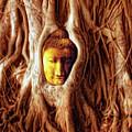 Buddha Of The Banyan Tree by Dominic Piperata