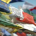 Buddhist Prayer Flags by Shay Fogelman