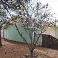 Budding Fruit Tree by Frederick Holiday